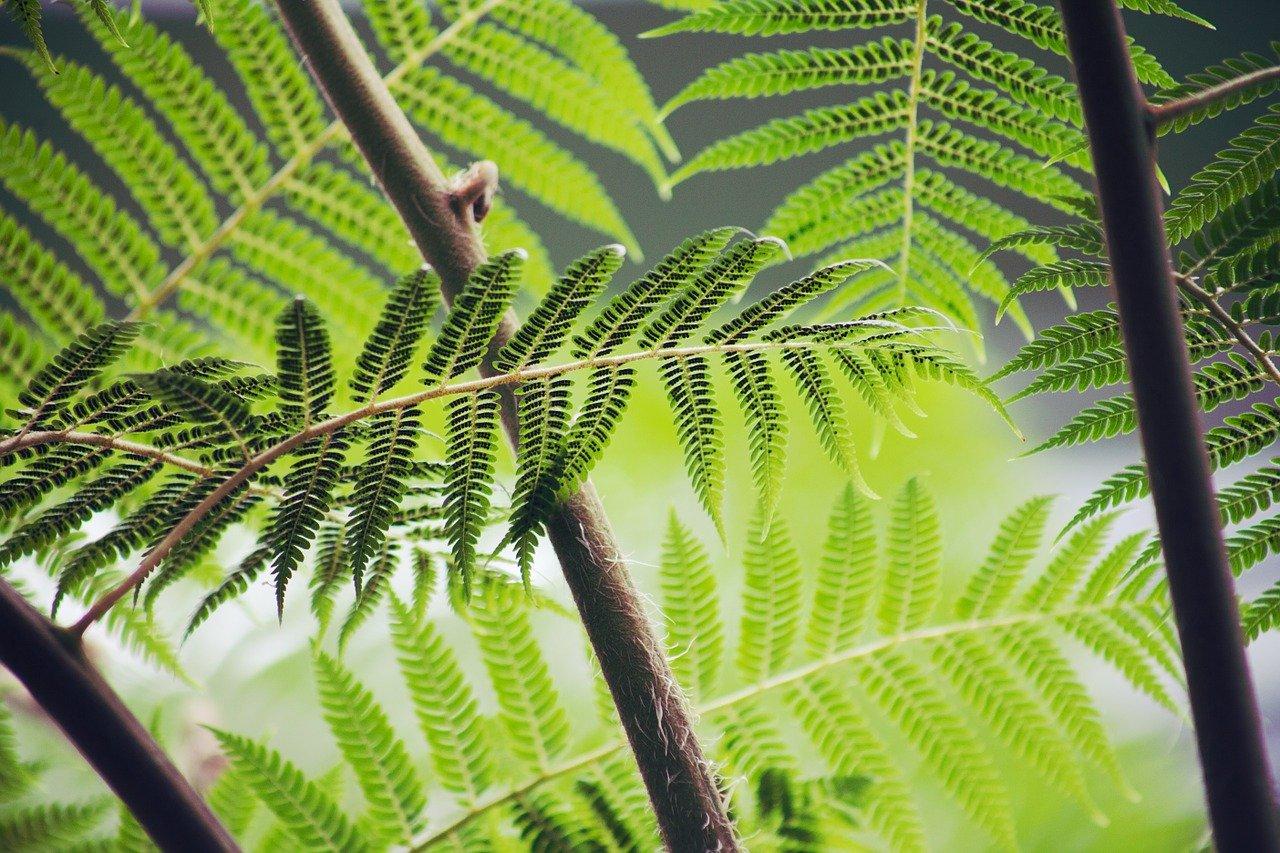 Photo de plantes en forêt